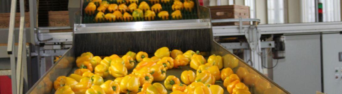 Sorteer band paprika